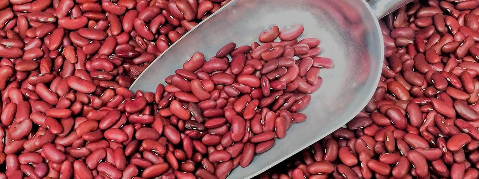 Продажа сортовой фасоли в Украине, Европе, Азии