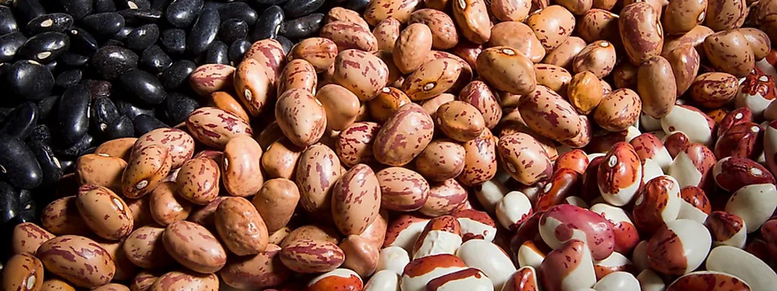 Только качественные семена фасоли